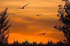 Coucher du soleil en bois Photographie stock libre de droits