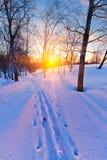 Coucher du soleil en forêt de l'hiver Photographie stock libre de droits