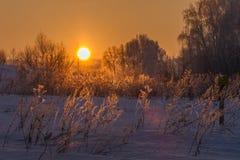 Coucher du soleil en forêt de l'hiver Photo stock