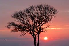 Coucher du soleil en hiver photo libre de droits