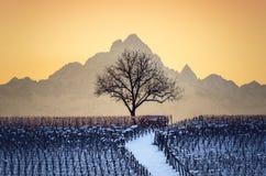 Coucher du soleil en hiver au-dessus des vignobles de Barolo Langhe, Piémont, Image libre de droits