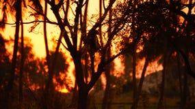 Coucher du soleil en Inde photos stock