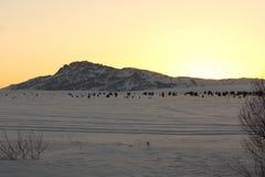 Coucher du soleil en montagnes Photo libre de droits