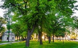 Coucher du soleil en parc - Belgrade, Serbie Images libres de droits