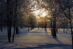 Coucher du soleil en parc d'hiver. Photographie stock