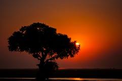 Coucher du soleil en parc national de Chobe Photos libres de droits