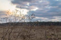 Coucher du soleil en premier ressort sur le pré Photo stock