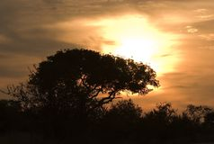 Coucher du soleil en stationnement de Kruger Image stock