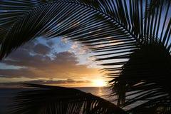 Coucher du soleil encadré par des frondes de paume. Image stock