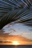 Coucher du soleil encadré par la paume, Maui. Photographie stock