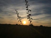 Coucher du soleil entre deux branches Photos stock