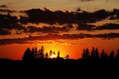 Coucher du soleil et arbres Photos libres de droits