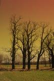 Coucher du soleil et arbres Images libres de droits