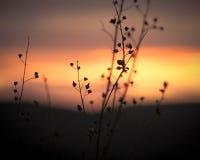 Coucher du soleil et branches Photo libre de droits