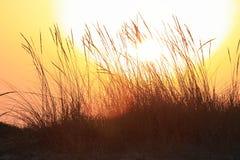 Coucher du soleil et herbe Images stock
