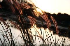 Coucher du soleil et herbe de mission Photographie stock
