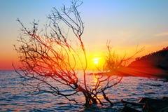 Coucher du soleil et mer Images libres de droits