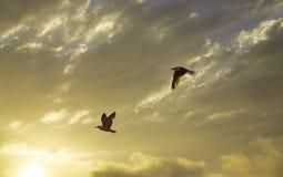 Coucher du soleil et mouettes Image stock