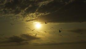Coucher du soleil et mouettes Photo stock