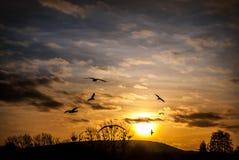 Coucher du soleil et oiseaux Image libre de droits