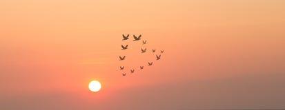 Coucher du soleil et oiseaux dans la forme de coeur Image libre de droits