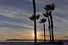 Coucher du soleil et palmiers de Coronado Photographie stock