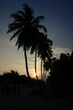Coucher du soleil et paumes Photographie stock libre de droits