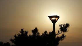 Coucher du soleil et réverbères Photo libre de droits