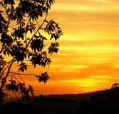 Coucher du soleil et silhouette d'arbre Image stock