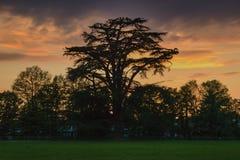 Coucher du soleil et un arbre images libres de droits