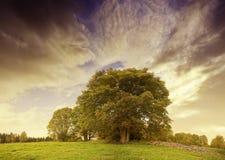 Coucher du soleil excessif d'automne au-dessus d'horizontal de pâturage Image libre de droits