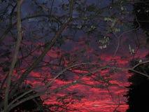 Coucher du soleil foncé et arbres Photos libres de droits