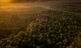 Coucher du soleil, forêt de du Pilat dunaire, bassin d'Arcachon image libre de droits