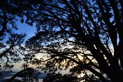 Coucher du soleil gentil avec des silhouettes des branches image stock