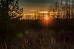 Coucher du soleil gentil par les arbres et l'herbe photos stock