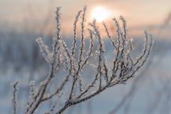 Coucher du soleil givré de soirée Photo stock