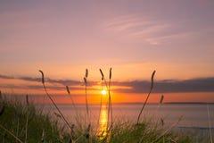 Coucher du soleil grand sauvage d'herbe Photographie stock libre de droits