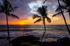 Coucher du soleil hawaïen de paume Photo libre de droits