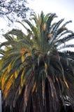 Coucher du soleil impérial de palmier photographie stock libre de droits