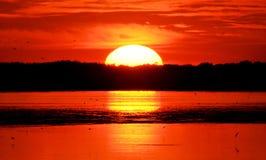 Coucher du soleil jumeau de chênes image libre de droits