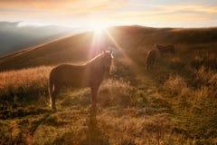 Coucher du soleil à l'arrière-plan de nature de montagnes Les chevaux silhouettent à la brume Image stock