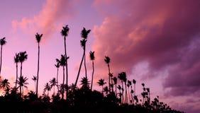 coucher du soleil Lilas-pourpre au-dessus de l'Océan Atlantique Silhouettes des palmiers Photo libre de droits