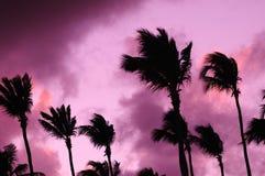 coucher du soleil Lilas-pourpre au-dessus de l'Océan Atlantique Silhouettes des palmiers Photos libres de droits