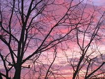 Coucher du soleil lumineux et arbres Image stock