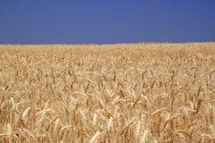 Coucher du soleil magique au-dessus du champ de blé Photo stock