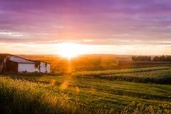 Coucher du soleil magnifique d'été au-dessus de ferme humble pendant la récolte maximale Photographie stock libre de droits