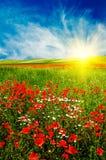 Coucher du soleil merveilleux au-dessus de pré vert. Photographie stock