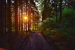 Coucher du soleil du milieu de la forêt image stock