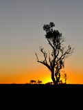 Coucher du soleil namibien Photo stock