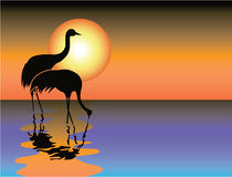 coucher du soleil noir de héron Photos stock